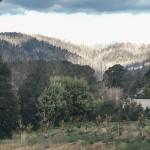 Steavenson Falls Marysville-10